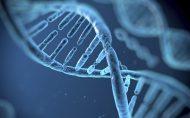 ژن ها می توانند کاری کنند که حس کنیم چاقیم؟