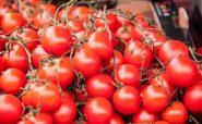 گوجه فرنگی ها گول زننده هستند