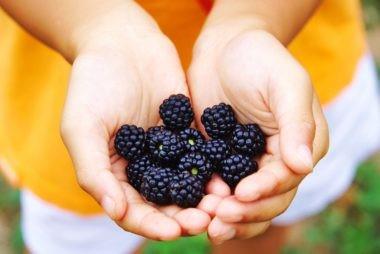 با این غذاها نتیجه گیری خود از ورزش را به حداکثر برسانید توت ها