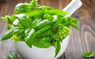 کنترل فشار خون با این گیاهان ریحان کاهش وزن دکتر کرمانی